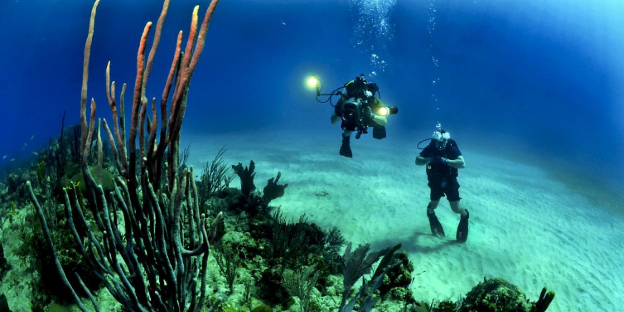 divers-681516_1920.jpg